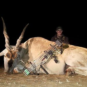 South Africa Bow Hunting Eland