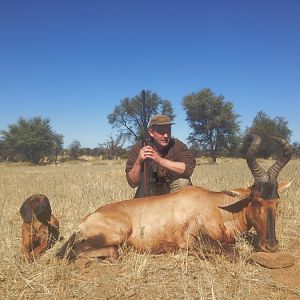 Red Hartebeest Namibia Hunting