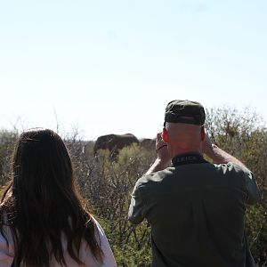 Game Viewing Namibia Elephant