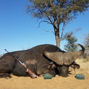 Hunting Buffalo South Africa