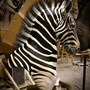 Zebra Pedestal Taxidermy