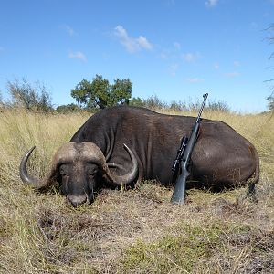 Buffalo Huntig South Africa