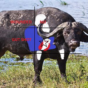 Buffalo Shot Placement