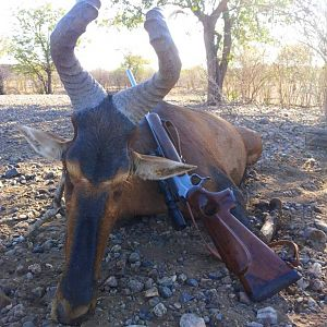 Red Hartebeest Hunting