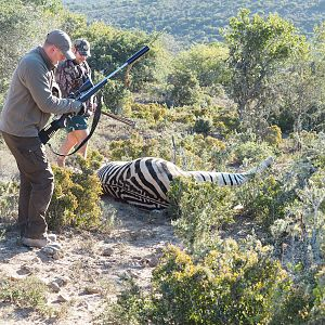 South Africa Burchell's Plain Zebra Hunt