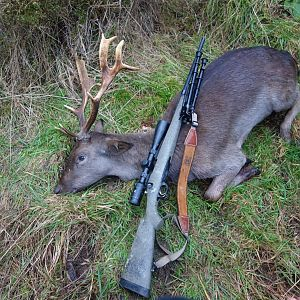 New Zealand Hunting Deer