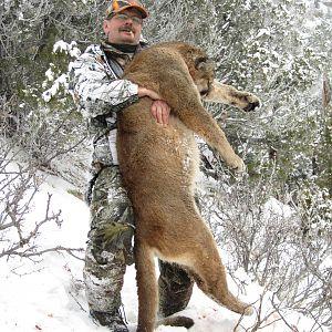 Hunting Mountain Lion