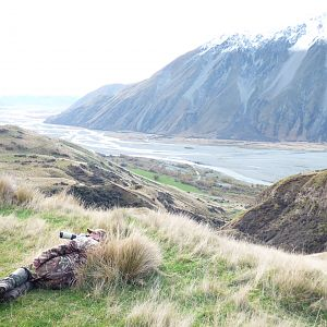 Glassing Tahr in New Zealand