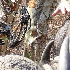 Cape Buffalo Bow Hunt