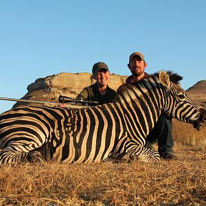 Burchell's Plain Zebra Hunting
