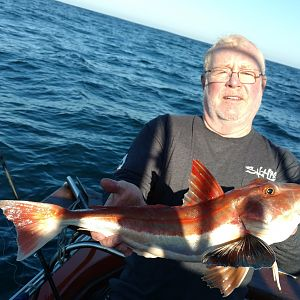 Gurnard South Africa Fishing