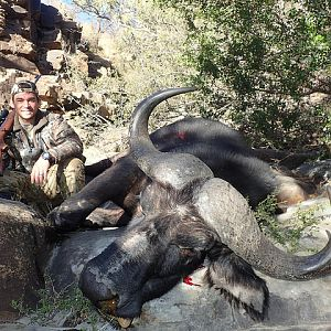 Cape Buffalo South Africa Hunt
