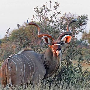 AH members pic of a great Kudu, taken on safari with us