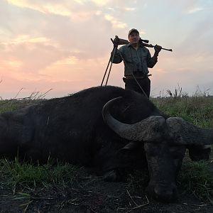 Coutada 14 Buffalo