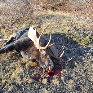 Moose Hunt in Northern British Columbia, Canada