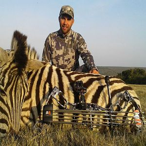 Burchell's Plain Zebra Bow Hunting South Africa