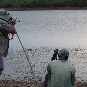 Hunting Crocodile in Zimbabwe