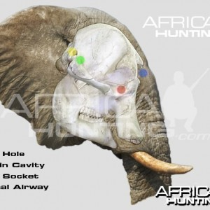 Hunting Elephant Head Shot Placement