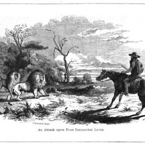 Drawing of Lions by Cumming