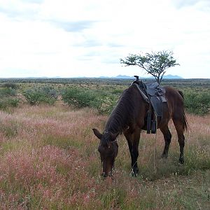 Namibia Horse riding
