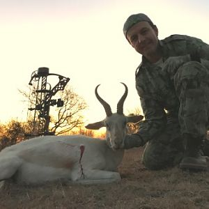 South Africa Bow Hunt White Springbok