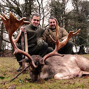 Hunt Fallow Deer France