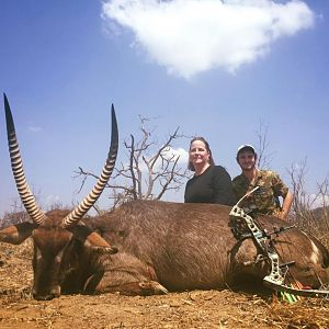 Bow Hunting Waterbuck South Africa