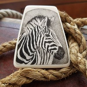Zebra Scrimshaw Art on Ebony stand