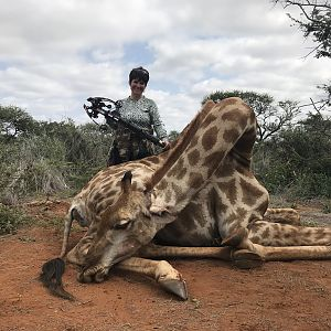 South Africa Crossbow Hunting Giraffe