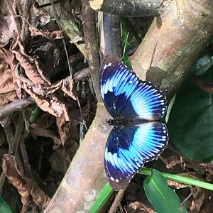 Butterflies from the forrest in Camaroon