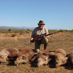 Cull Hunt Warthog in South Africa