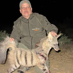 Hunting Aardwolf South Africa