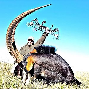 South Africa Bow Hunt Sable Antelope Bow Hunt