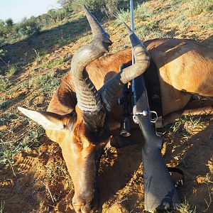 Red Hartebeest Hunt in Namibia