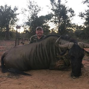 Blue Wildebeest Bow Hunt in South Africa