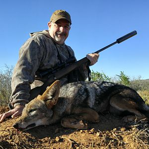 Hunting Jackal in South Africa