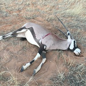 Hunt Gemsbok Namibia