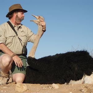 Namibia Hunting Ostrich