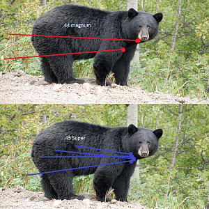 Bear Shot Placement
