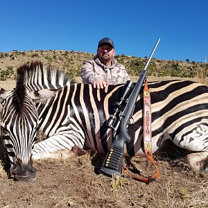 Burchell's Plain Zebra Hunting South Africa