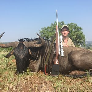 South Africa Hunting Blue Wildebeest