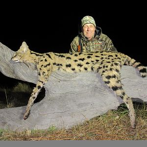 Serval Cat Hunt in South Africa