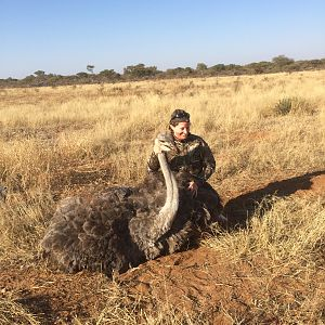 South Africa Hunting Female Ostrich