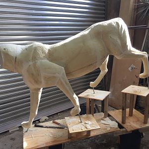 Lioness Full Mount Taxidermy Process