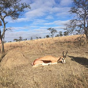 South Africa Hunting Springbok