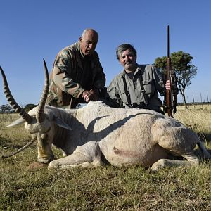 South Africa Hunting White Blesbok