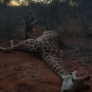 Bow Hunting Giraffe in South Africa