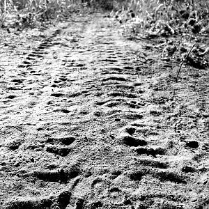 Leopard Track on Vehicle Track Tanzania