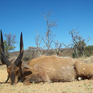 South Africa Bow Hunting Bushbuck