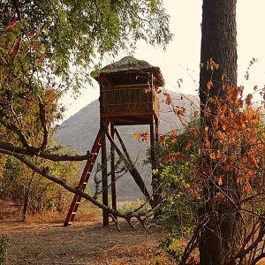 New observation/hunting towers are build in Rosewood for selective trophy hunting